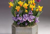 Spring Awakening Bulb Garden At Jackson And Perkins inside size 900 X 900
